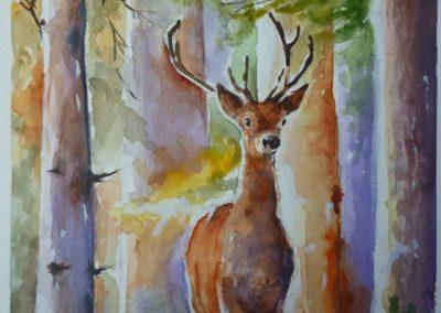 Cervo nel bosco | Acquarello su carta cm. 23,3x16,5