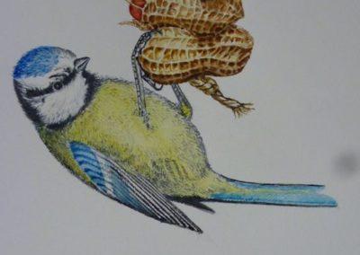 Cinciarella sulle arachidi | Acquarello su carta cm. 27,5x16,5