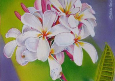 Frangipani | (plumeria) Pastello su carta cm. 18x18