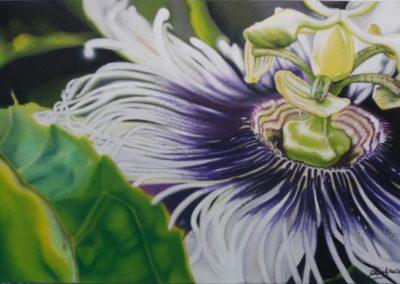 Fruit of passion … il frutto della passione | Pastello su carta cm. 24,5x43