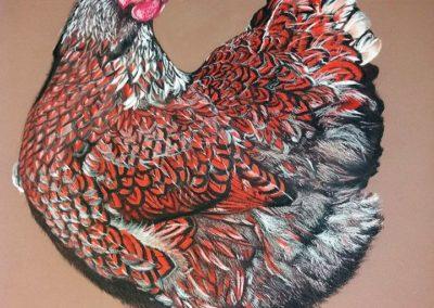 PRIMAVERA … il gallo canta | Pastello su carta cm. 40x35